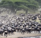 13 Epic Animal Migrations That Prove Just How Cool Mother Nature Is..