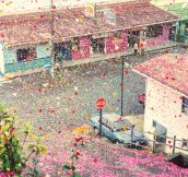 Millions Of Flower Petals Erupted From A Volcano Covering An Entire Village… And It Is Breathtaking
