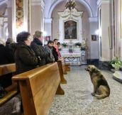 Dog Attends Mass At This Church Everyday Because It's Where He Last Saw His Owner..Awwwww