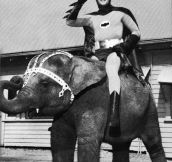 Batman riding a small elephant 1967