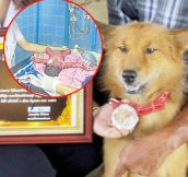 This Dog Saved an Abandoned Baby Wrapped in Plastic
