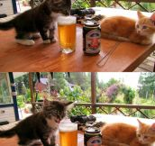 Kitties First Drink…