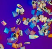 10 Mundane Things That Look Awesome Under a Microscope