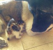 A Former Guard Dog Meets A Kitten Dumped In The Woods. And My Heart Can't Handle The Result.