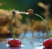 12 Incredible Photos That Prove Snails Live In A Magic World