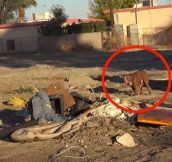 Abandoned Dog Gets a Big Surprise…I Love Happy Endings