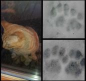 A stray cat appeared on my door step last night and it has two paws on each front leg!