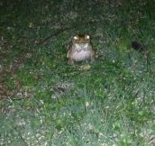 Found the real life hypnotoad