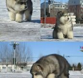 It's fat and fluffy and I need one…