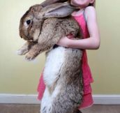 Worlds Largest Bunny