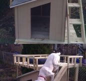 This guy built a deck for his dog's house.