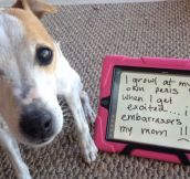The Best of Dog Shaming – Part 24 (30 pics)
