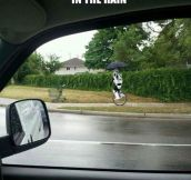 The Rare Unicycling Stormtrooper