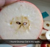 Grumpy Apple