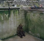 He Can't Bear The Injustice