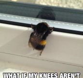 Poor Little Bee