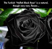 The Only Acceptable Rose For a Goth's Wedding Anniversary