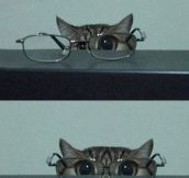 Cat In Glasses Isn't Kitten Around