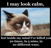 You May Think I'm Calm