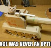 War! It's Meow Or Never