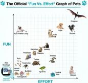 Before You Get a New Pet, Check This Out