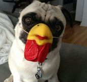 Pug Chicken Mask