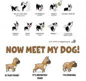 Meet My Dog