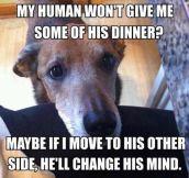 Every Dog Has The Same Strategy