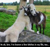 Dog Consoles Goat