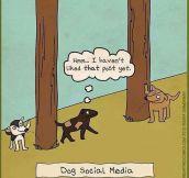 Social Media For Dogs