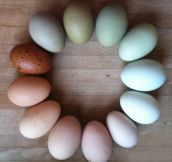 A Color Wheel Of Farm Fresh Eggs