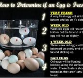 If You Need Some Help With Your Eggs