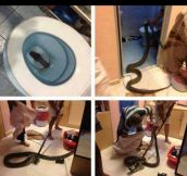 What Would Happen If You Flushed It?