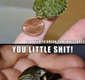 Adorable Tiny Turtles
