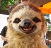 Hey Sloth, Say Cheese