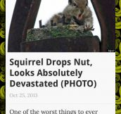 Squirrel Problems