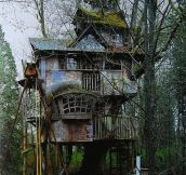 Abandoned Treehouse