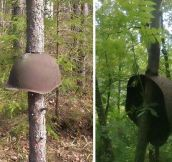 Add Post World War II Equipment Swallowed By Trees In Russia