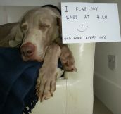 The Best of Dog Shaming (40 Pics)