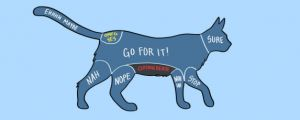 How To Properly Pet Animals…(15 Charts)