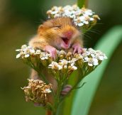 The Worlds Happiest Animals