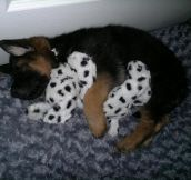 33 Animals Cuddling With Their Stuffed Animals