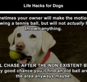Life Hacks for Dogs (8 Pics)