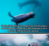 An Unbelievable Encounter With A Leopard Seal