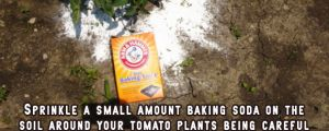 15 Brilliant Gardening Tips That Are Super Easy…