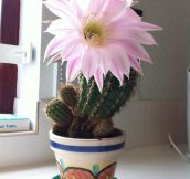 A Very Rare Flower