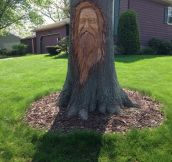 Carved Tree In The Neighborhood