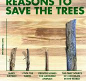 Reasons To Save Trees