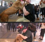 Dogs Never Forget The People They Love