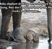 The Cutest Baby Elephant